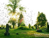 Halloween, Cemetery, Grave Yard, Green, Fall, Autumn, Birds, Nature Photography, cemetery Photography, Sunset - 8daysOfTreasures