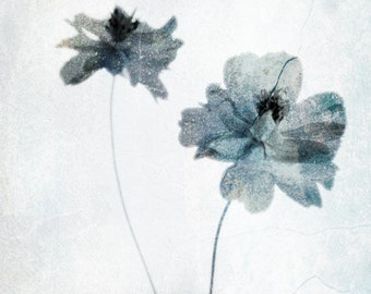Ethereal Flower Photograph Pale Blue Gray White Wall Decor Botanical Nature Blue Grey White Print 8x12