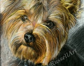 Yorkie -Yorkshire Terrier Dog LARGE A4 A3 or A2 COLOR PENCIL Art Print by Russellart