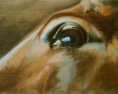 Horse Look XII Original Oil Painting