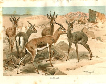 Gazelles Antique Print, Fauna Color Lithograph, Brehms Tierleben Print, Retro Home Decor, Nursery Wall Hanging