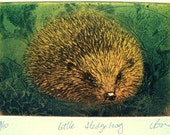 Little Hedgehog print. Affordable fine art. Limited edition etching. Coppert plate etching