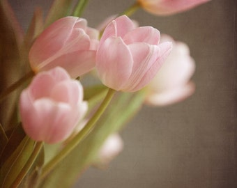 Pink Tulips, Spring Flowers, Easter Flowers, Botanical