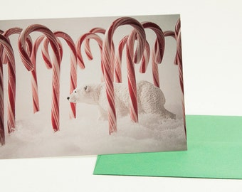 Photo Christmas Card: Polar Bear Lost in Candy Canes