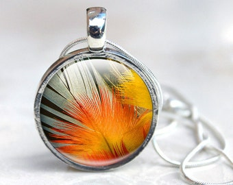 Orange Pendant Necklace, Vibrant Orange and Yellow Feather Pendant. Feather Macro Photo  Bird feather photo Glass Dome Necklace