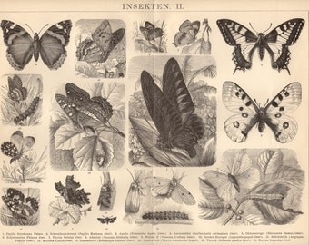 1884 Butterflies, Moths and Caterpillars Antique Print, Natural History, Nature, Lepidoptera, Insects, Inchworms, Loopers, Papilio