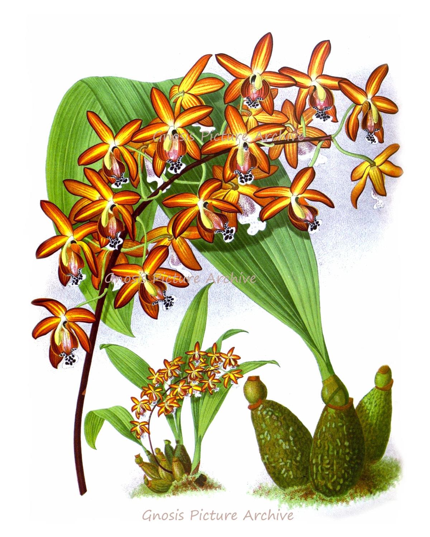 Hawaiian flower art | Etsy