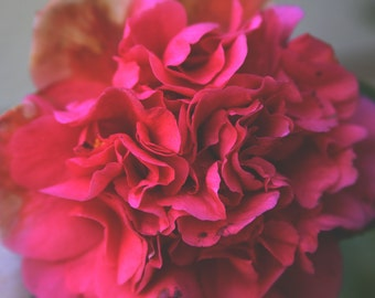 Pink Flower Photo, Pink Camelia, Floral Photo, Dreamy Pink, Georgia O'Keefe inspired, Pink Nature Flower Photo Art, Pink Camelia Photography