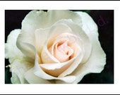 White Rose - Photograph A5 Blank Card
