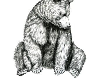 Bear- Limited Edition Giclée Print