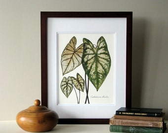Pressed leaf print, 11x14 double matted, Caladiums, pressed Caladium leaves, wall decor no. 0083