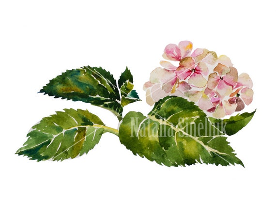 Hydrangea twig with leaves digital download from original watercolor garden illustration, cottage chic style painting clipart