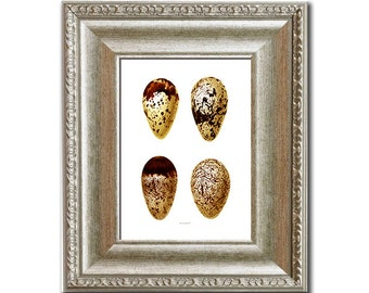 "Easter Decor Antique Bird Eggs Print No.9 in Golden Yellow Brown Spotted Shore Bird Egg Wall Art print 8x10"" Easter Spring Dining room Decor"