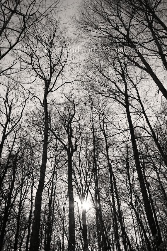 sunlight through trees black - photo #38