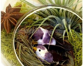 Autumn Love Birds Tillandsia Aviary, Hanging AIR PLANT TERRARIUM, Glass Orb Globe, Woodland Animals Party Decor Housewarming Gift For Him
