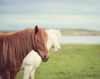"Two Icelandic Horses, Nature Photography, Fine Art Print, Pastel Colors, Horse Photography ""The Dreamers"""
