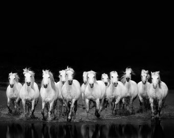 "Horse Photography, Black and White Photography, Wild White Horses Running in Water, Nature Print, Horse Art ""The Wild Ones"""
