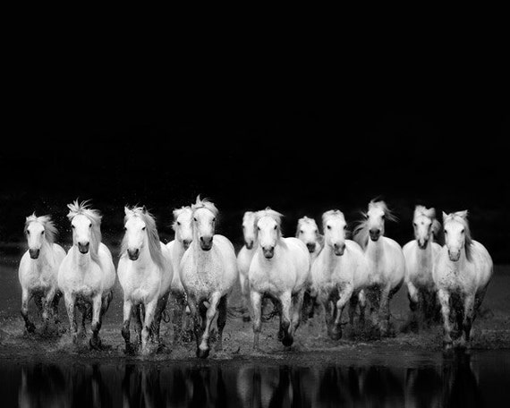 Horse Photography Black and White Photography Wild White