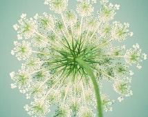 Flower Photography, Queen Anne's Lace, Botanical Print, Teal, Aqua, Summer, Fine Art Print, Nature Photography