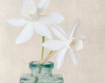 White Daffodil Print, Still Life Photography, Nature Photography, Spring Flower, Cottage Chic, Fine Art Photography Print