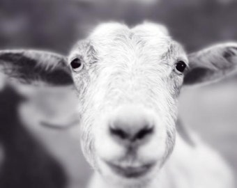 Smiling Goat Art Print, Animal Photography Print, Cute Animal Art Print, Black and White Photography, Farm Animal