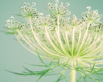 Botanical Print, Nature Photography, Queen Anne's Lace, Aqua, Yellow-Green, Flower, Wall Art, Home Decor, Art Print