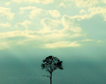 Nature Decor Tree Photography Black Silhouette Minimalist Wall Art Teal Sky Picture 8x10 inch Fine Art Photography Print One Tree