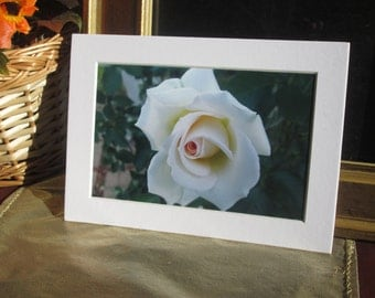 Flowers From My Garden - White Rose