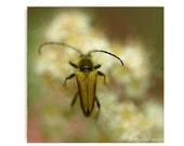 Golden Flower Beetle Beetle Photograph Affordable Home Photography Prints Nature Photography Nature Lover Woodland Scene Flower