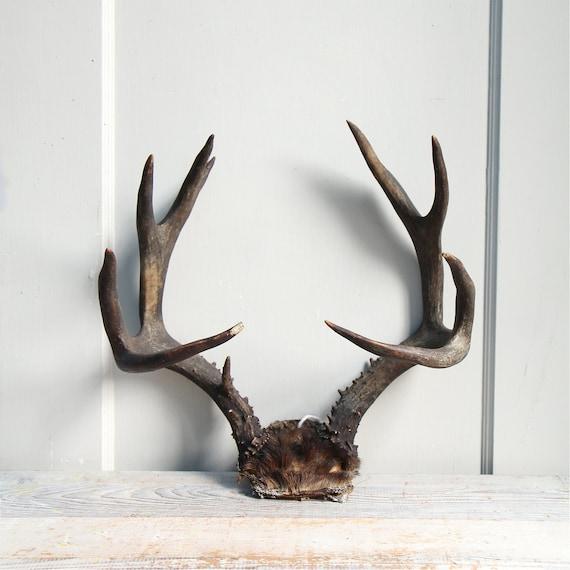 Vintage deer antler rack horns natural decor jewelry for Antlers decoration