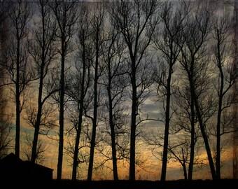 silhouette woodland landscape photography nature office decor home decor Fine Art Photograph