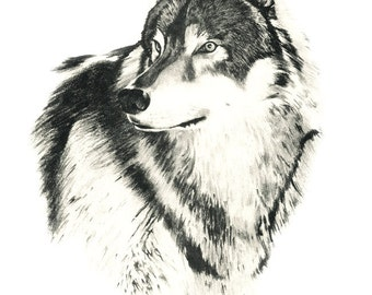 TIMBER WOLF Art Print Pencil Drawing Signed by Artist DJ Rogers