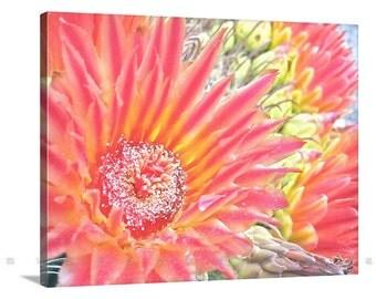Floral Art, Canvas Art, Photography on Canvas, Cactus Flowers, Flower Print, Red Flowers, Nature Photography, Barrel Cactus, Tucson Arizona