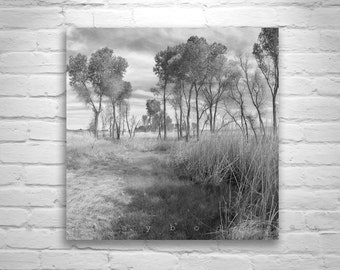 Fine Art Photography, Tree Photography, Tree Art, Nature Photography, Black and White, Prairie, Grasslands, Square Print, Square Art