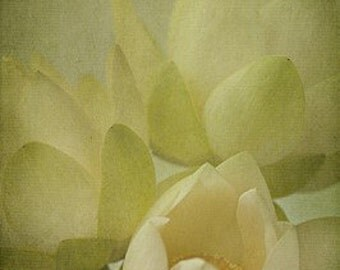 Lotus Blossom II - 4x6 Fine Art Photograph
