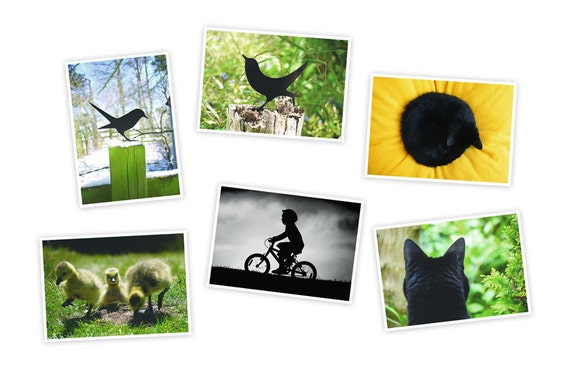 Art Postcards 6 Card Pack of birds, cats and storm boy