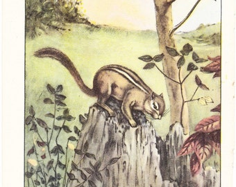 1926 Animal Print - Chipmunk - Vintage Antique Natural History Home Decor Art Illustration for Framing
