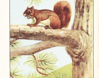 1926 Animal Print - Red Squirrel - Vintage Antique Natural History Home Decor Art Illustration for Framing