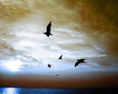 On a Wing and a Prayer 4x6 Modern Abstract Nature Fine Art  Sea Gull Bird Photo Print