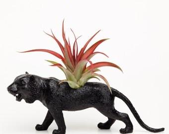 Tiger Planter with Air Plant , Tiger Room Decor, College Dorm Ornment, Safari Animal Plant Pot, Black Geekery