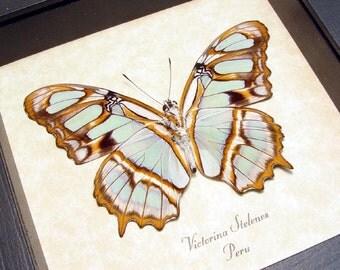 Mother's Day Gift Leaf Green Orange Real Framed Butterfly Conservation 236v