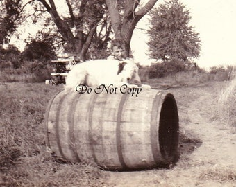 A Dog on a Barrel and His Boy - Vintage Photo - 1939