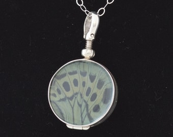 Real Butterfly Wing Jewelry Charles Darwin Pendant