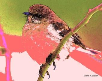 Fat Bird Sparrow Art, Pink and Green, Spring Decorative Artwork, Wall Hanging, Home Decor, Woodland Nature Wildlife, Giclee Print, 8 x 10