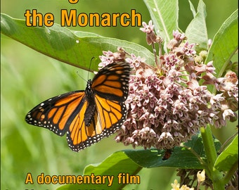 Plight of the Monarch DVD, documentary film about the declining population of the monarch butterfly by Cindy and Kirby Pringle