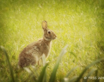 Spring Bunny Photography Print - Botanical - Nature Photography - Bunny Photo - Nursery Print