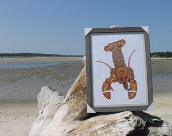 """Framed Lobster Original Drawing: 18"""" x 24"""""""