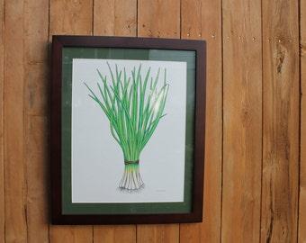 "Framed Onions Original Drawing: 16"" x 20"""