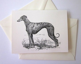 Whippet Greyhound Dog Note Cards Set of 10 with Matching Envelopes