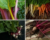 Colorful Heirloom Vegetable Seeds - The Rainbow Collection